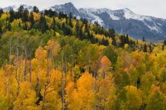 Autumn aspens below the Sneffels Range, Colorado.