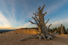 Bristlecone Point, Bryce Canyon National Park, Utah.