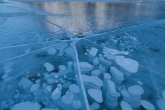 Bubble pattern in ice below Mt. Michener, Abraham Lake, Alberta.