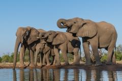 Elephants at waterhole, Botswana.