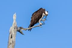 Osprey, Florida.