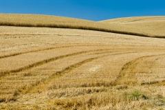 Tracks in harvested field, Washington.