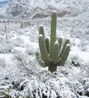 Snow in the Sonoran desert, Arizona.