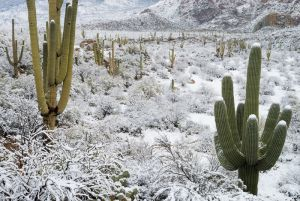 Desert snow, Arizona.