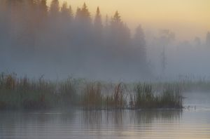 Foggy summer sunrise, British Columbia.