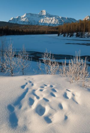 Mt. Fryatt and the Athabaska River, Alberta.