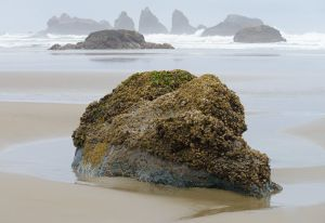Seastacks at low tide, Oregon.