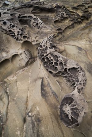 Eroded sandstone forms, Shore Acres State Park, Oregon.