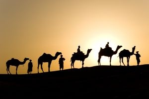 Camel caravan at sunset, Jaisalmer, India.