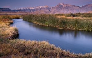 Owens River at dawn, near Bishop, California.