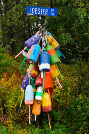 Lobster pot buoys on street sign, Owl's Head, Maine.