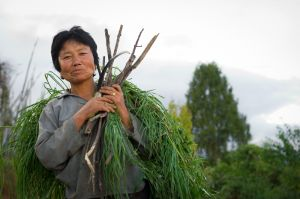Woman with fodder, in Nobgang, Bhutan.