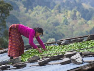 Woman spreading chilies to dry on roof, Bhutan.