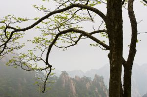 Mt. Huangshan (Yellow Mountain) in fog.