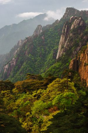 Mt. Huangshan (Yellow Mountain) and Chinese white pines.
