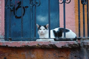 The watching cat, Guanajuato, Mexico.