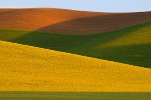 Farm field pattern, sun and shadows on early wheat; near Pullman, Washington.