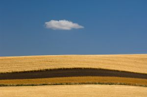 Fields with plowed strip between them, and lone cloud,Washington.