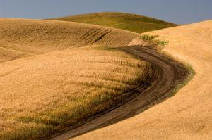 County road through wheat field, Whitman County, Washington.
