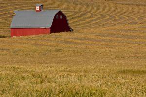 Barn and harvested field, Washington.