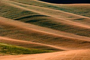 Farm fields, seen from Steptoe Butte, near Colfax, Washington.