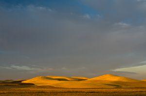 Wheat fields in late light, Washington.