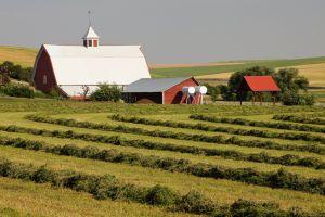 Barn and cut hay in field, Washington.