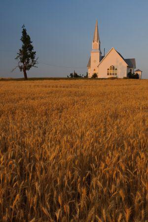 Rocklyn Methodist Church and wheat field, Lincoln County, Washington.