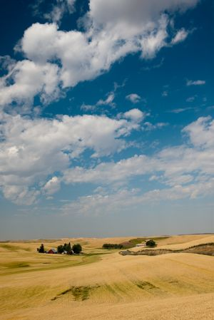 Farm and wheat fields, Washington.