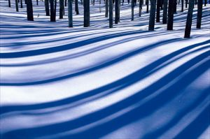 c8-shadows on snow.jpg