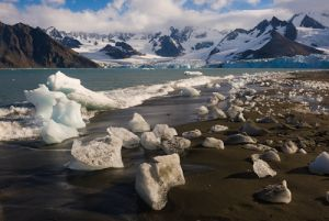 Ice on shore and the Weddell Glacier, Gold Harbor, South Georgia Island.