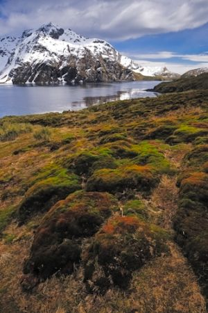Godthul, South Georgia Island.