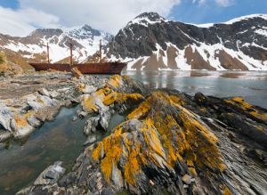 Ocean Harbor, South Georgia Island.  Once a whaling station, the ship Bayard (wrecked 1911) remains, with liched-rocks.
