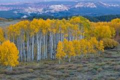 Autumn aspens, Boulder Mountain, Utah.